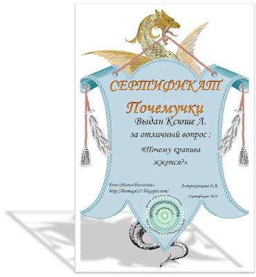 sertifikat-pochemuchki