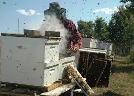 Μελισσοκομικοί χειρισμοί Ιουλίου-Αυγούστου