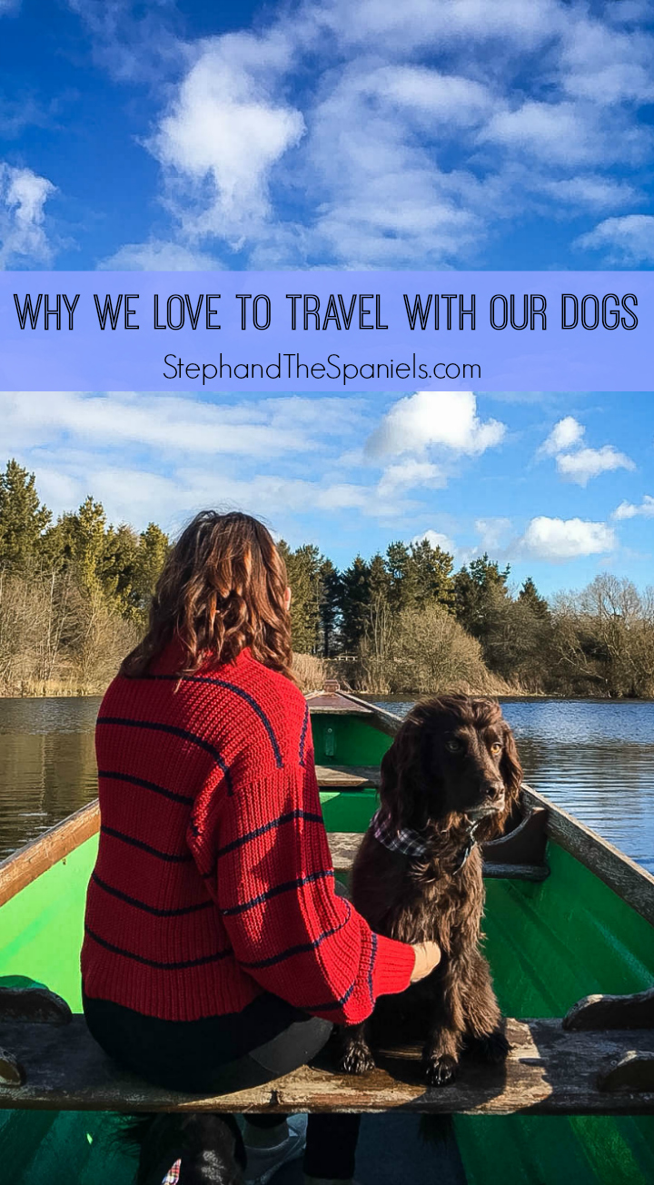Why we love to Travel with Dogs   Steph & The Spaniels: Dog