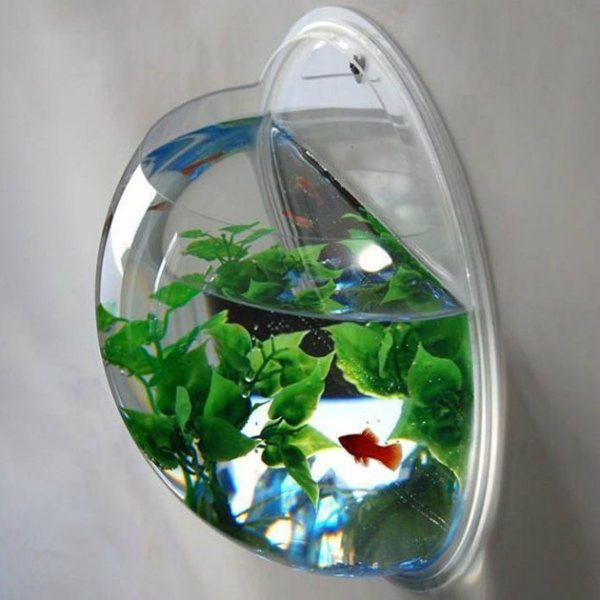 cara menghias aquarium bulat