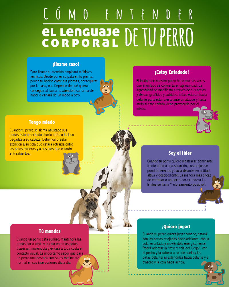 Post-Portal- cuidador-beneficios-blog-perros