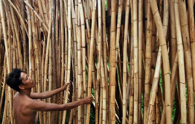 19 Contoh Hasil Hutan dan Manfaatnya Baik Berupa Kayu Maupun Non-Kayu