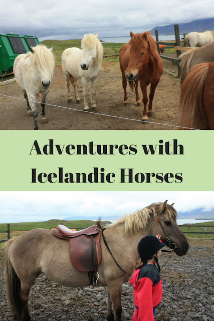 Adventures with Icelandic Horses for Families