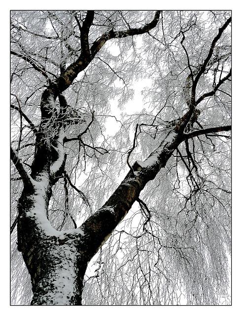 동유럽 폴란드 겨울