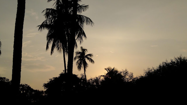 An Afternoon Sunset Photography