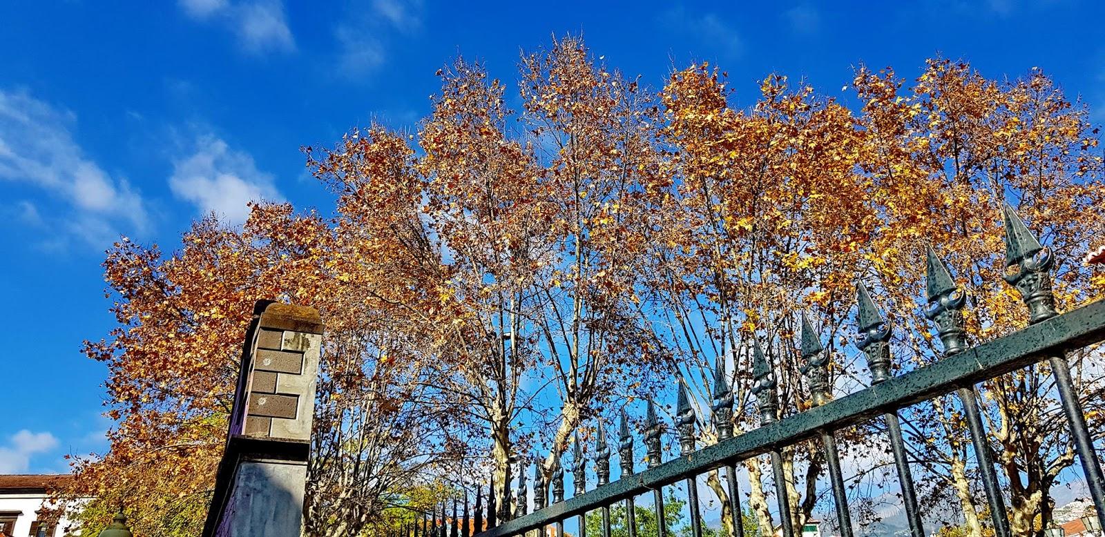 a árvore e o céu