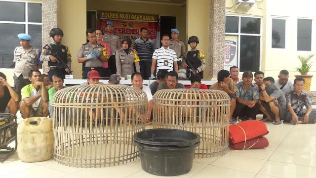 Polres Muba Bongkar Perjudian Sabung Ayam Lintas Kabupaten, 19 Orang Diamankan Berikut BB