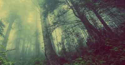 Ini yang harus dilakukan jika tersesat di hutan