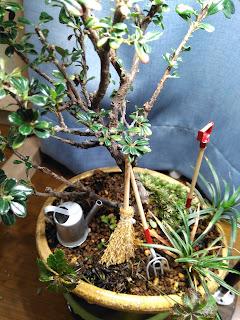 白シタンと斑入玉竜の庭