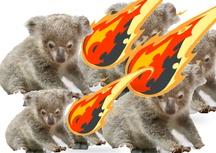 Pluie de météorites sur de pauvres koalas sans défense
