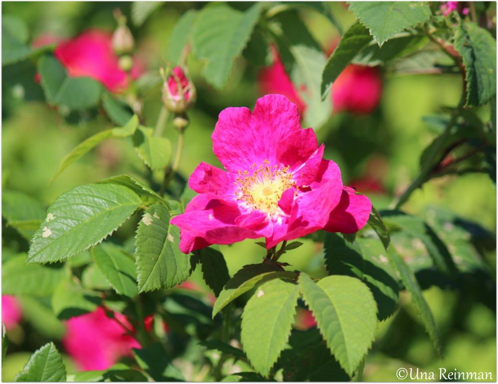 Hallatar: Runon ja suven päivä