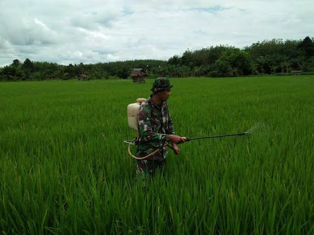 Untuk Memberikan Asupan Unsur Hara Mikro dan Pengendalian Hama, Tentara ini Dampingi Petani Lakukan Penyemprotan