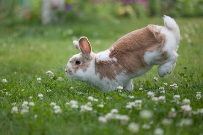 Imagen conejo blanco y beige