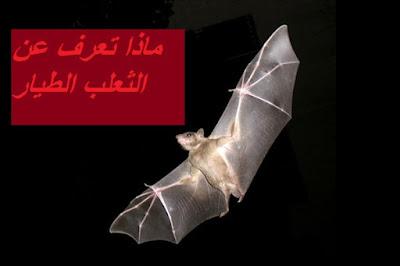 عش الخفاش