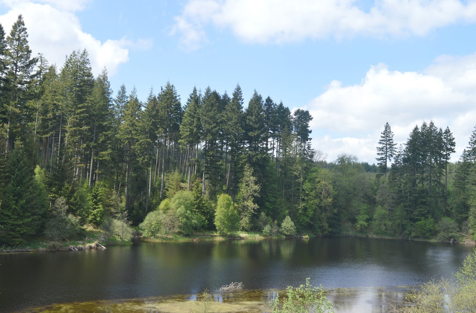 First Time Visitor Guide to Kielder - Matthews Linn