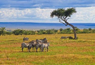 Persebaran Fauna di Permukaan Bumi