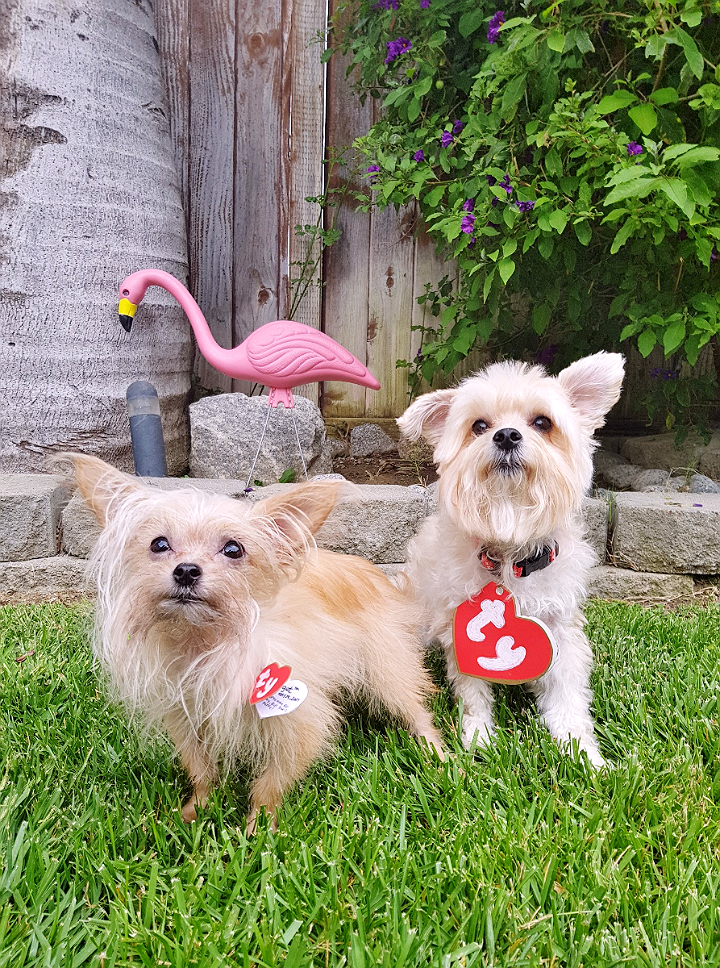 Beanie Baby Pet Costume DIY- 5 Budget Friendly Pet Costume Ideas #DoThe99 #99Obessed #AD