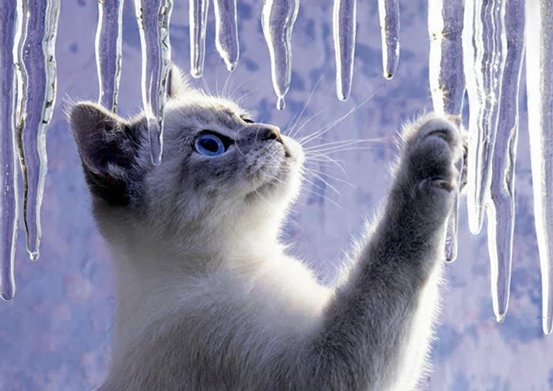 La classe dei balocchi for Il gatto inverno