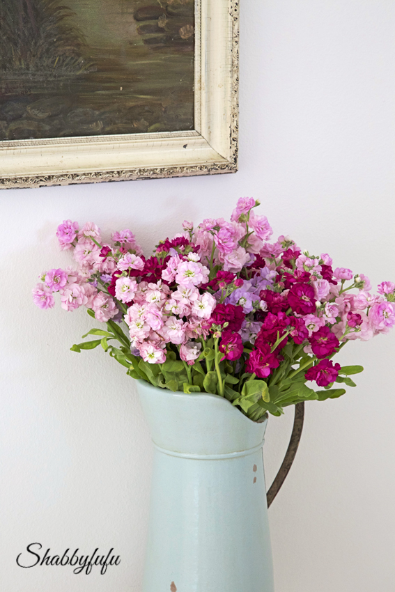 stock flowers in a blue pitcher