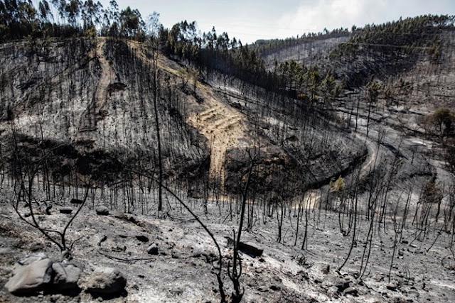 Portugal | Os fogos e a mercantilização da terra
