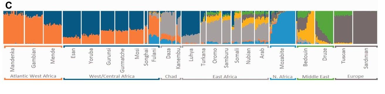 EgyptSearch Forums: Egyptian DNA, Forumbiodiversity, sub-Saharan Africa