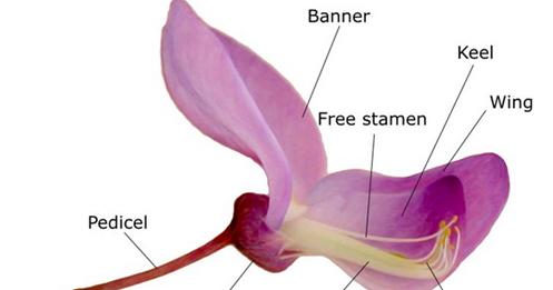 76+ Gambar Bunga Mawar Dan Bagian Bagiannya Kekinian