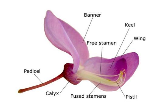 Mengenal Struktur Bunga Sempurna dan Bagian-Bagiannya