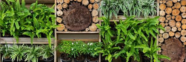 Mercredi astuce // Créer un mur végétal sur son balcon 🌿