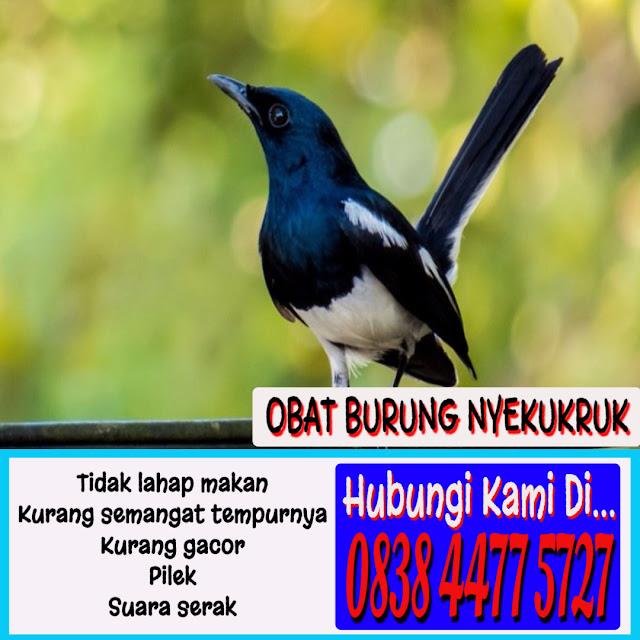 Obat Burung Pilek