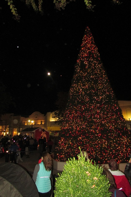 Christmas Trees Richmond Va