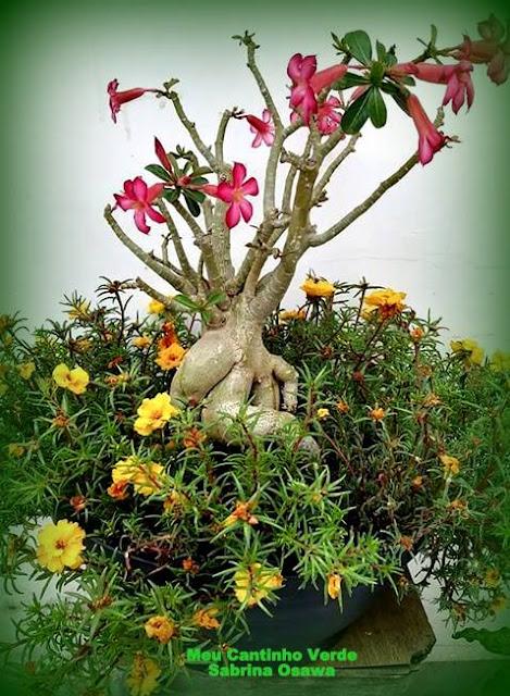 Como cuidar de plantas?