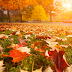Five Energy-Saving Fall Projects