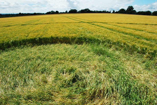Crop Circle at Bishops Cannings, Wiltshire, UK  16 July 2016