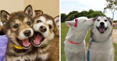 Aromatherapy For Man's Faithful Friend - Dog