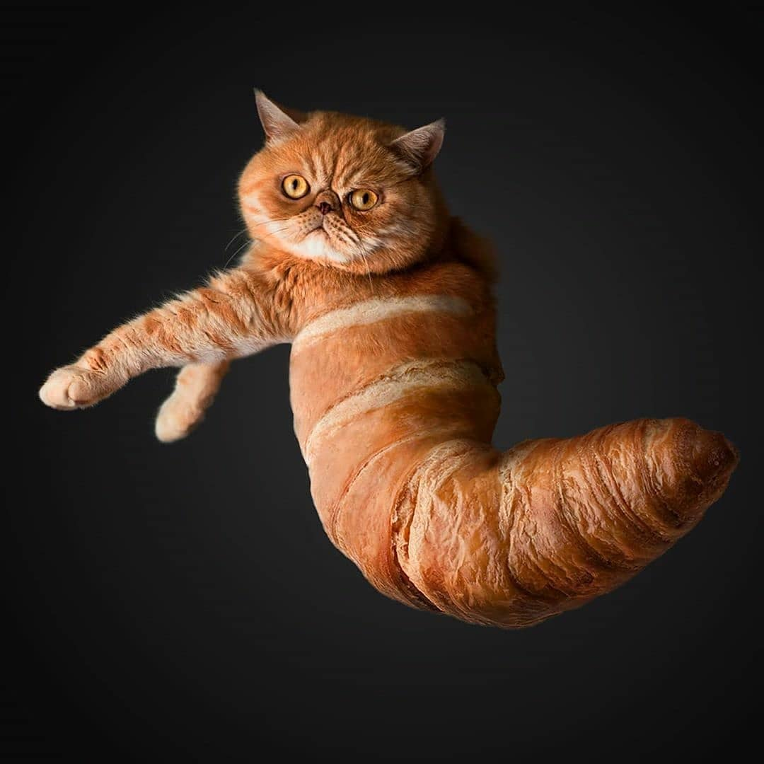 Cat-puffs - photo manipulation