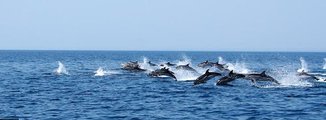 I delfini nel mar Grande