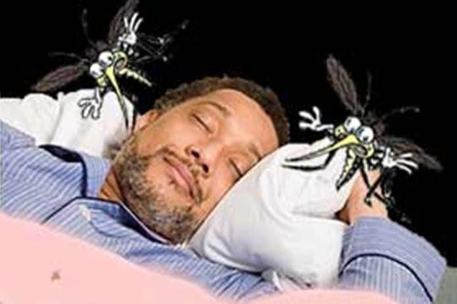 Image result for Beberapa Alasan Mengapa Nyamuk Suka Berterbangan Di Area Telinga Dan Kepala