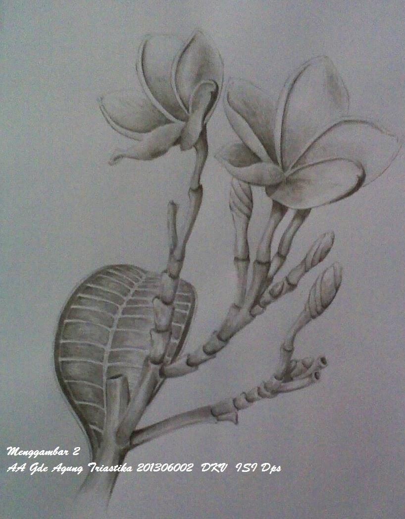 Gambar Bunga Kamboja Pensil Gambartanaman Xyz