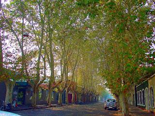 Alameda de Plátanos: Centro Histórico de Colonia Del Sacramento