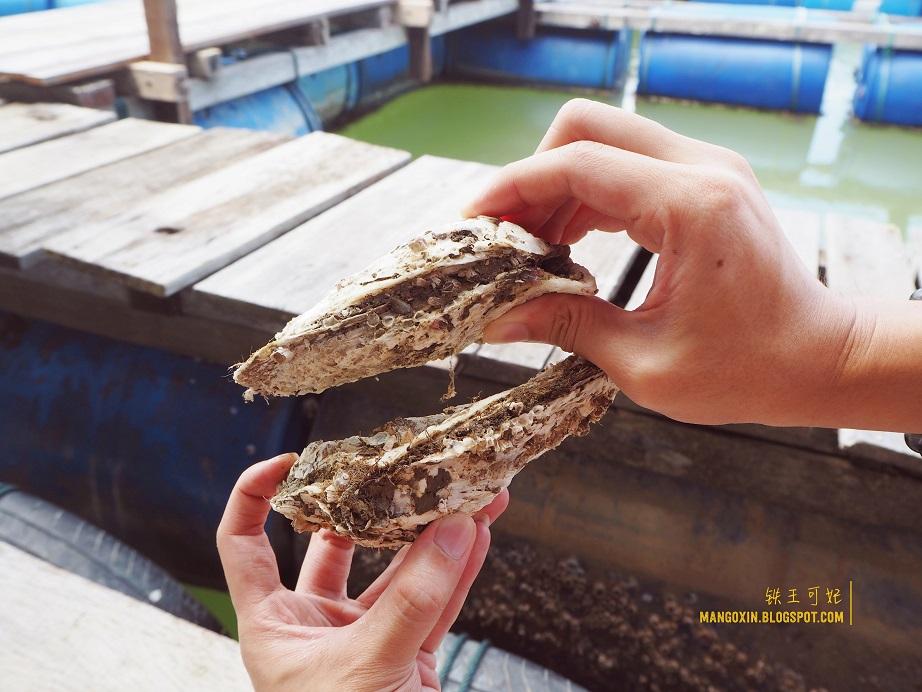 [柔佛周末游] Muaryi麻驿麻坡旅游咨询站 参与参观生蚝养殖团&体验自包Otak