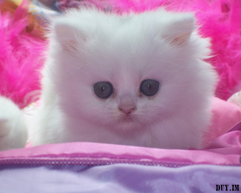 cute cats wallpaper so lovely kucing gambar wapapers kitten kittens pink cat yang pretty sweet cutest wallpapersafari cool super color