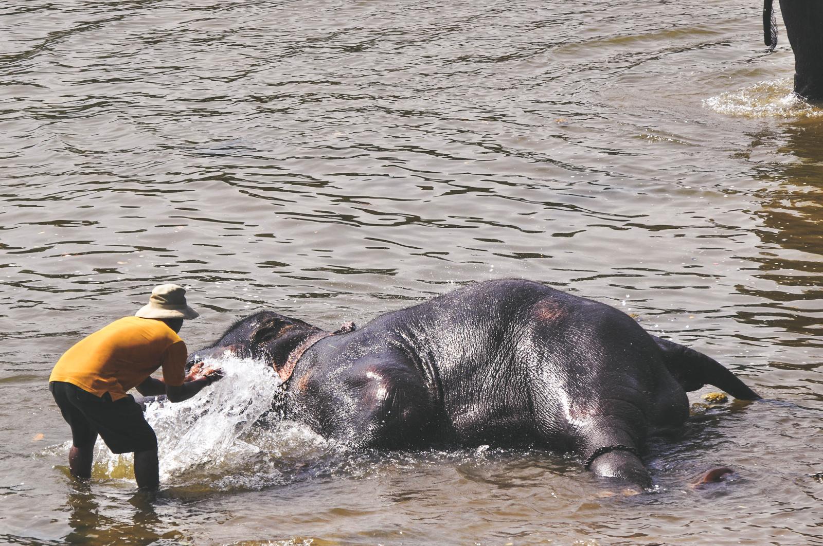 Sri Lanka Pinnawala Elephant Orphanage Bathing