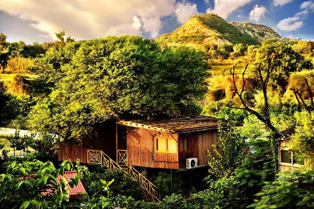 Treehouse resort jaipur best price
