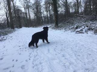 Wilka staat op bospad in de sneeuw