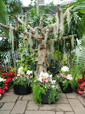Mistletoe and three containers at the 2018 Allan Gardens Conservatory Winter Flower Show by garden muses--not another Toronto gardening blog