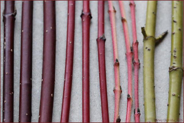 blog barwy ogrodu