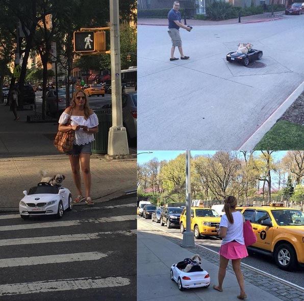Creativity or stupidity? People now drive their dogs around in remote-controlled cars