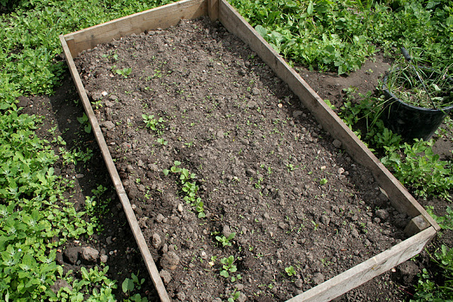The Victory Garden - Radish and Carrot seed have been planted in a raised bed