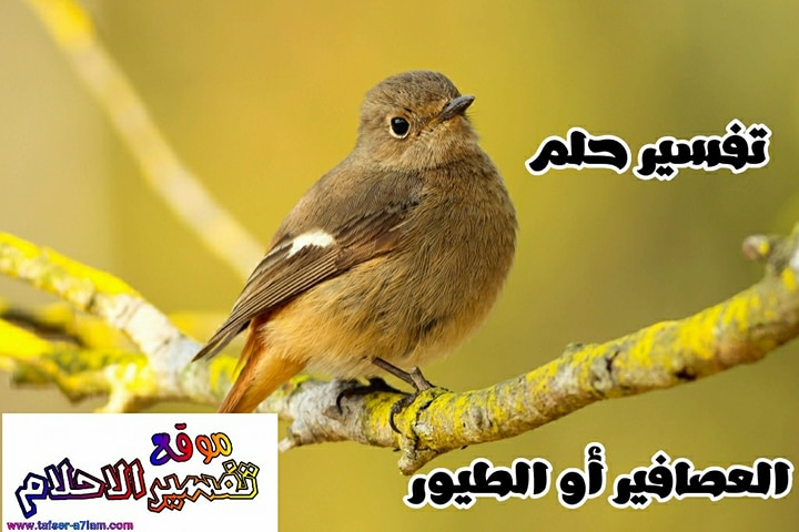 صور طيور جميلة بألوان رائعة ميكساتك