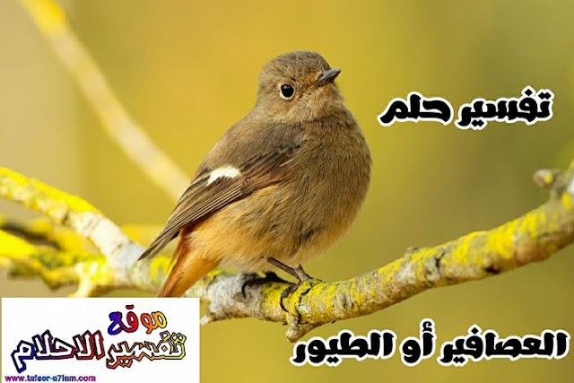تفسير رؤية وسماع صوت العصافير في المنام